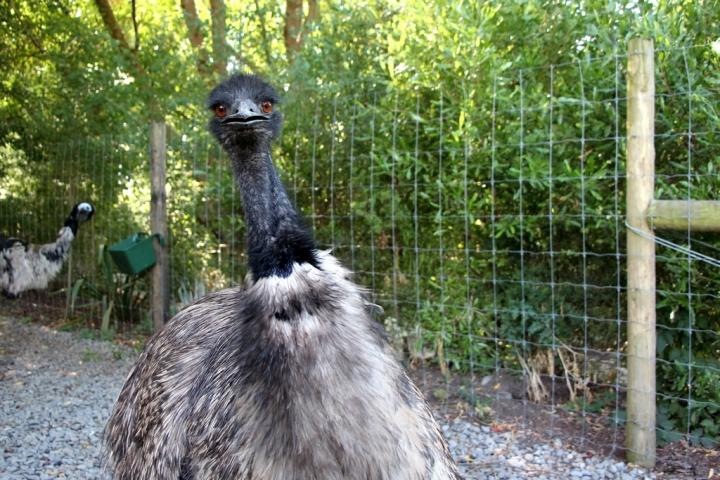 3 mois en NZ: Ile du sud – Mesfavoris